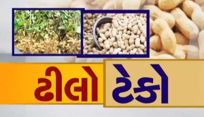 Peanuts Purchase: Farmers Harassed For Slowing Down Peanuts Purchase In Jamnagar