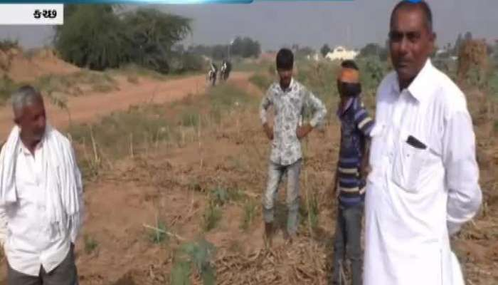 Horticultural farmers in Kutch suffered a huge loss