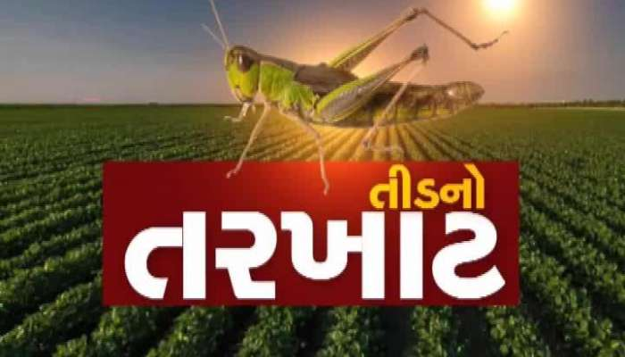 Locust Attack In Mehsana, Deployed Central 18 And 5 State Teams