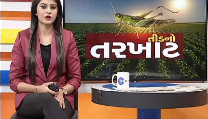 Green Caterpillar Attack On Crops In Patan District After Rainfall
