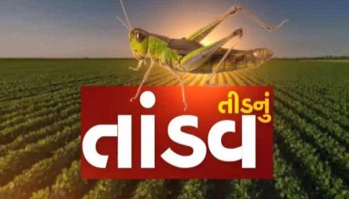 unique experiment of locust hunting farmers