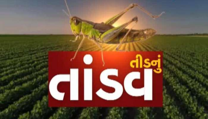 87 Villages In Gujarat Are Affected By Locust Attack