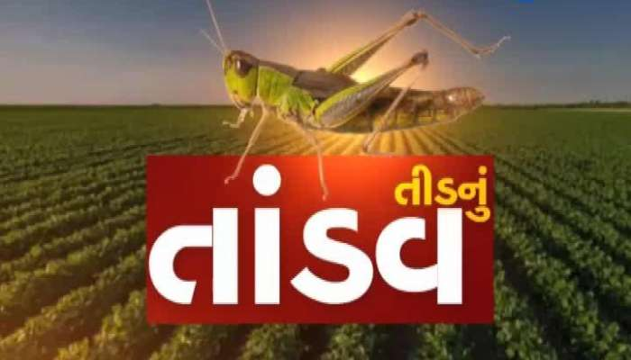 A Large Herd Of Locusts Entered In Tharad Diocese