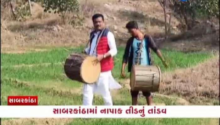 Khedbrahma MLA plays drummer and locusts