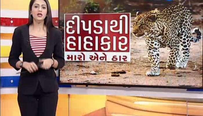 Farmers Fear To Leopards Terror Again  In Amreli