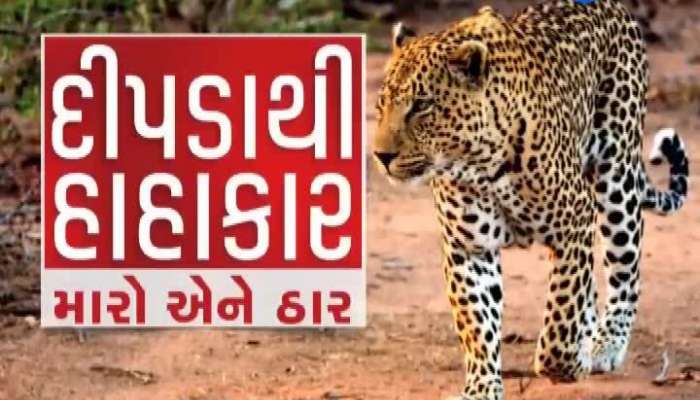 pepole in fear due to Leopard in Surat, Bharuch and Ankleshwar districts watch video