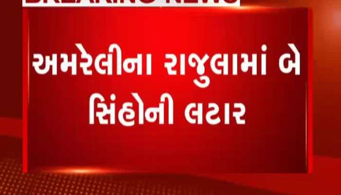 lion and leopard update of gujarat