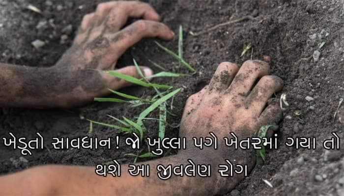 ખેડૂતો સાવધાન! ગુજરાતમાંથી મળી આવ્યો સ્વાઇન ફ્લુથી પણ જીવલેણ વિચિત્ર રોગ