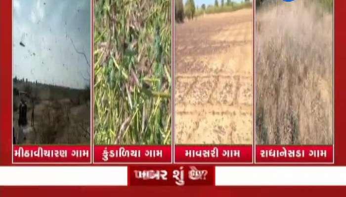 Loctus again attack on Banaskanatha's border villages