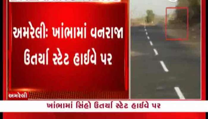 Viral video of lion from Amreli