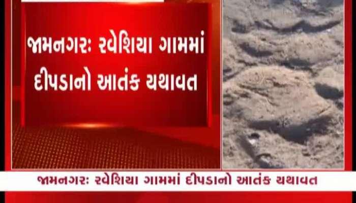 Leopard Terror In Raveshia Village In Jamnagar