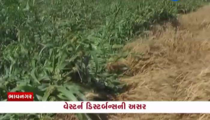 Special Talk With Farmers Of Bhavnagar Due To Rainfall In State