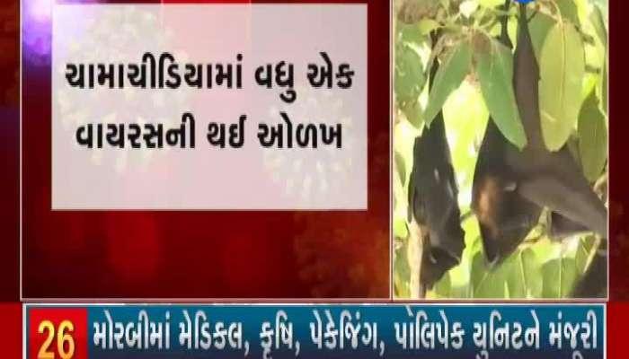 Samples of bats were also taken from Gujarat