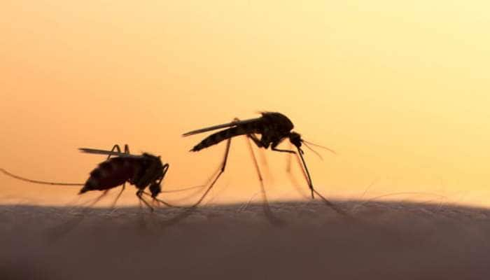 શું મચ્છરોથી કોરોના વાયરસ ફેલાય છે? શોધકર્તાઓએ શોધ્યો આનો જવાબ