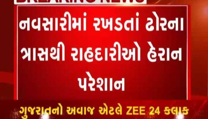 City dweller annoyed by stray cattle in Navsari
