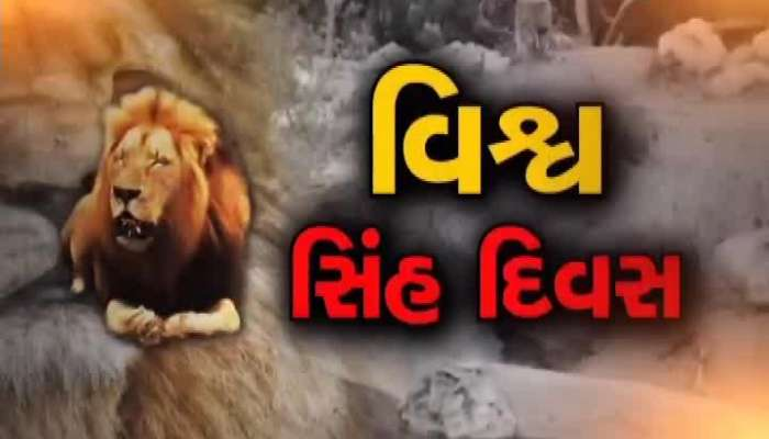 Gujarat's 'An Ban and Shaan' is an Asian lion