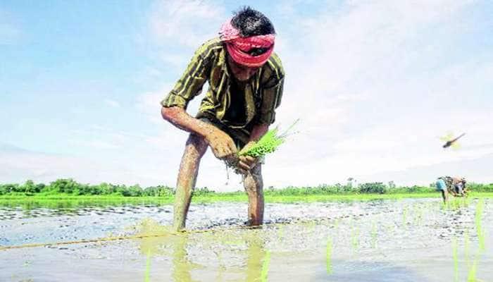 ગુજરાતમાં 57 ટકા વરસાદથી ખેડૂતોમાં ખુશી, વાવણીમાં થયો વધારો