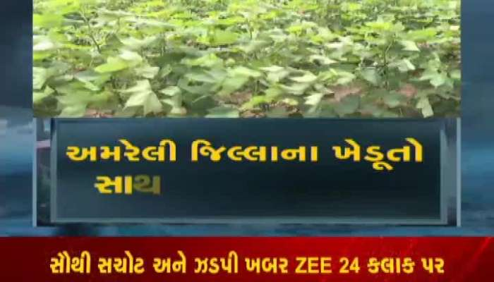 Zee 24 Kalak Special Conversation With Amreli Farmers