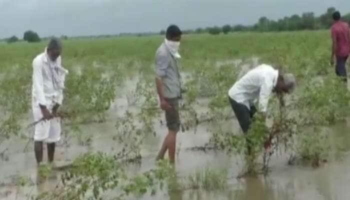 પાટણ જિલ્લામાં ભારે વરસાદથી ખેડૂતોને મોટું નુકસાન, સરકાર પાસે સહાયની માંગ