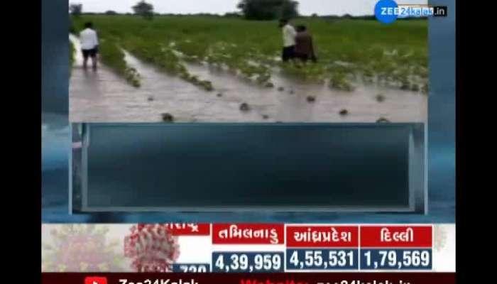 Rain damage to kharif crop in Surendranagar district