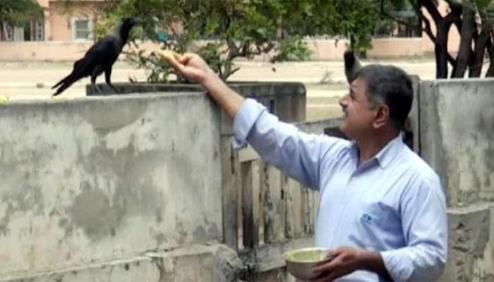 ગુજરાતમાં ક્યાંય જોવા નહીં મળે આવી કાગડા અને માણસની મિત્રતા