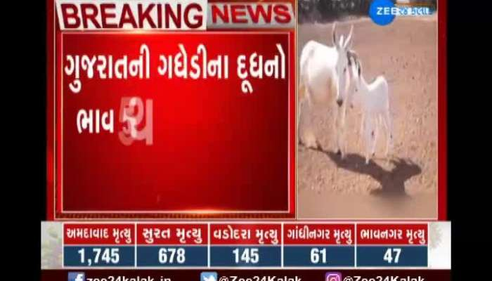Gujarat donkeys milk is the most expensive milk in the world know the reason
