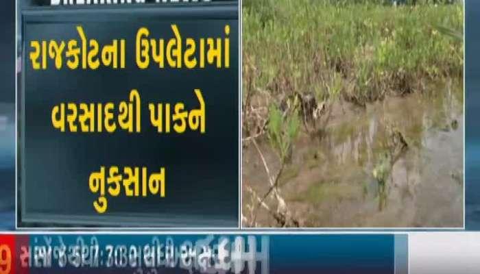 Crops Damaged By Rains In Upleta