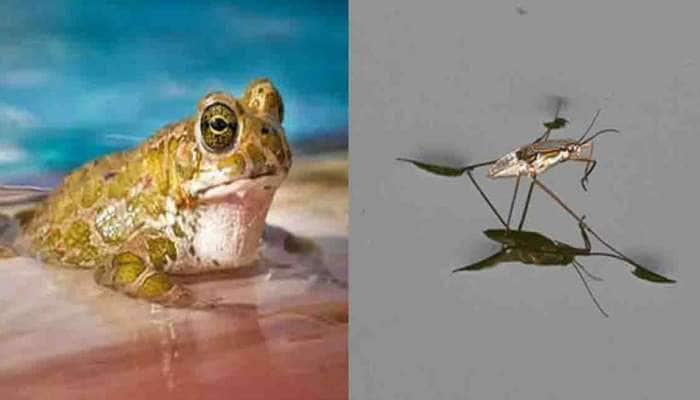 માછલીનુ નામ ભુજીયા, દેડકાનું નામ પ્રશાંત.... વિચિત્ર નામથી માર્કેટમાં આવ્યા નવા પ્રાણી