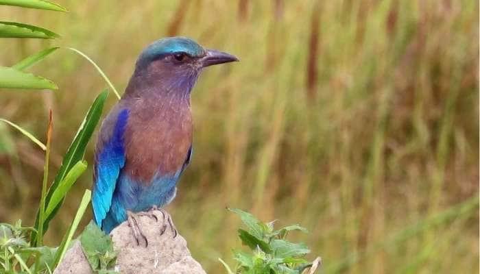 દશેરા પર આ પક્ષીના દર્શન કરવાથી આખું વર્ષ નહિ આવે કોઈ મુસીબત