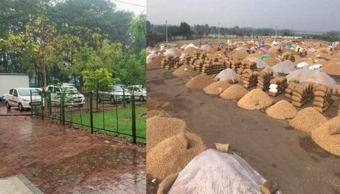 કમોસમી વરસાદે ખેડૂતોની આશા પર પાણી ફેરવ્યું, રાજ્યમાં મગફળીની ટેકાના ભાવે ખરીદી 3 દિવસ માટે બંધ
