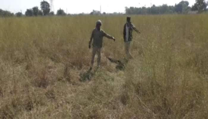 સિંહોની સ્વભાવ વિરુદ્ધની હરકત: 2 યુવતીઓ પર કર્યો હૂમલો, એકને ફાડી ખાધી, વન વિભાગે શરૂ કરી કાર્યવાહી