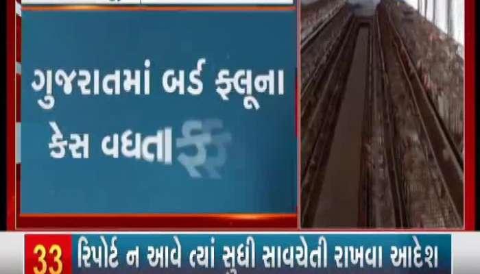 Bird flu cases on the rise in Gujarat
