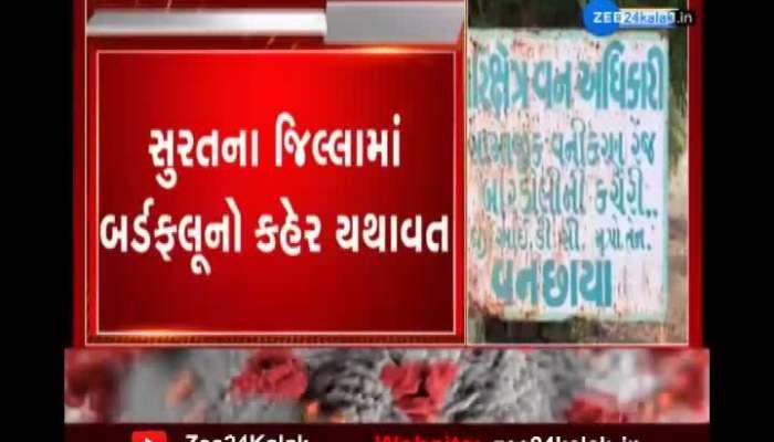 After Madhi in Surat district, bird flu also spread in Bardoli