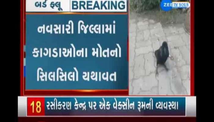 Crow deaths continue in Navsari district