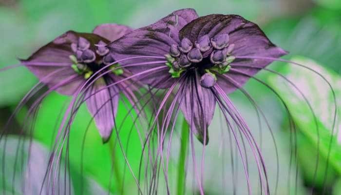 Most Weird Plants On Earth: પાંચ વિચિત્ર છોડ, તેના રૂપ રંગ જોઈને આપ પણ ચોંકી ઉઠશો