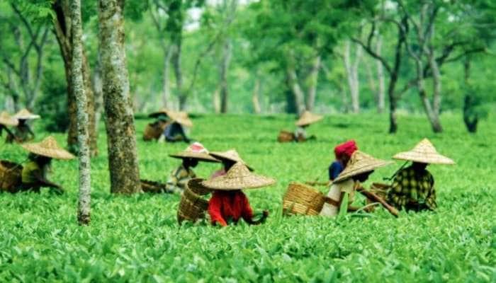 Tea City of India ની કેટલીક મજેદાર વાતો, જે જાણીને તમે પણ ચોંકી જશો