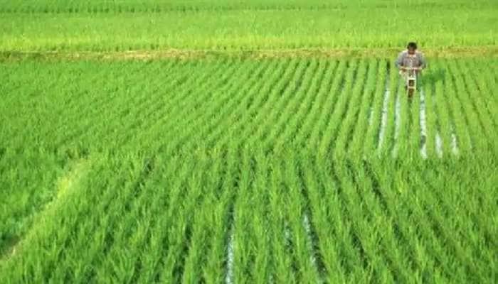 સરકારનો મહત્વનો નિર્ણય, નર્મદા કમાન્ડ વિસ્તારના ખેડૂતોને ઉનાળુ પાક માટે 5 માર્ચથી મળશે પાણી