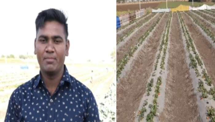 ખેડૂતનો સફળ પ્રયોગ, જામનગરની જમીન પર નવા પાકોનું કરી રહ્યા છે સંશોધન