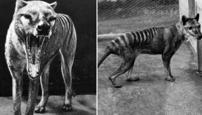PHOTOS: અડધા કૂતરાં અને અડધા વાઘ જેવુંરહસ્યમય  પ્રાણી, તસવીરો જોઈને તમે પણ ડરી જશો