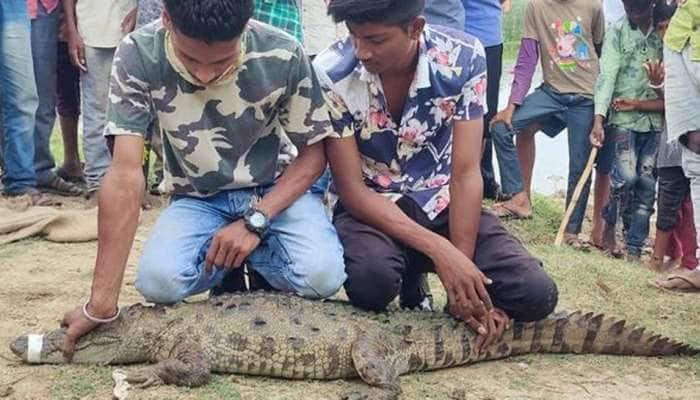 VADODARA: કુમેઠા ગામમાંથી સાડાપાંચ ફૂટનો મગર પાંજરે પુરાયો, વન વિભાગ દ્વારારેસક્યું