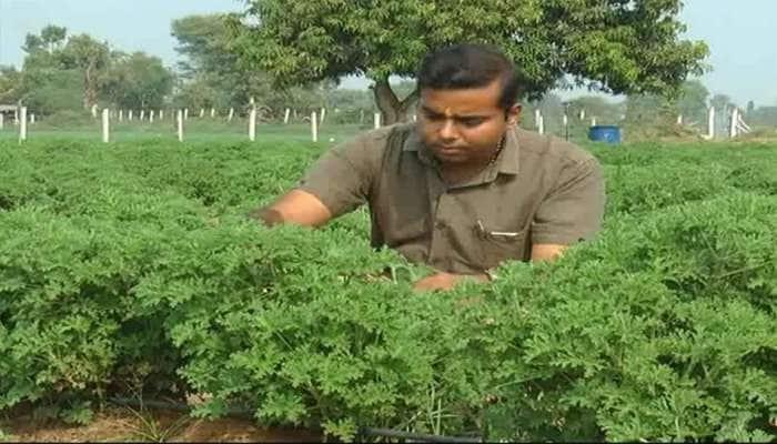 એક આઈડિયાને કારણે બનાસકાંઠાના ખેડૂતનું નસીબ ચમક્યું, હવે કરે છે લાખોમાં કમાણી