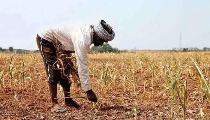 શું આવનારા સમયમાં ખાવાના સાંસા પડી જશે? ખેતીવાડીની સ્થિતિ દર્શાવતો એક ચોંકાવનારો રિપોર્ટ