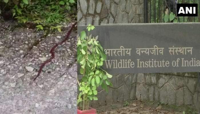 Uttarakhand માંથી મળ્યો દુર્લભ પ્રજાતિનો ઝેરીલો સાપ, જે 6 હજાર ફૂટ ઊંચાઈ પર રહેવાનું પસંદ કરે છે!