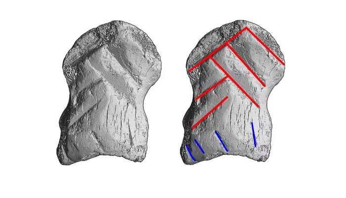 World's Oldest Jewelry: કેવા હતા દુનિયાના સૌથી જૂના ઘરેણાં? 51 હજાર વર્ષ પહેલાંની આ તસવીરો જુઓ
