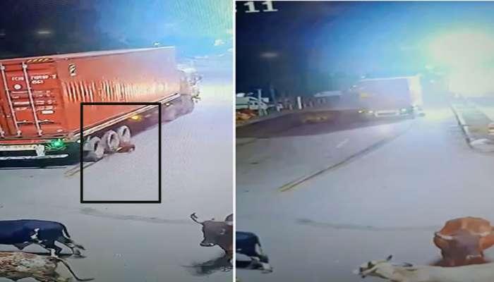 સુરત : કન્ટેનરની અડફેટે આવી રસ્તે રખડતી ગાય, CCTV ફૂટેજ જુઓ
