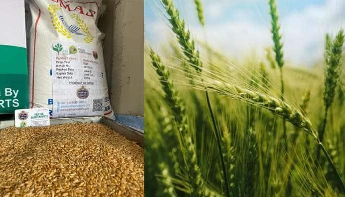 Gujarat ના આ ખાસ ઘઉં 7 દેશોમાં થાય છે Export, એકદમ ખાસ છે તેનો સ્વાદ અને ખેતીની રીત