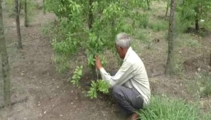 રાજકોટના ધોરાજીના ખેડૂતે માત્ર 120 રૂપિયાનું રોકાણ કર્યું હવે બની જશે કરોડપતિ