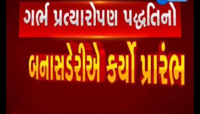Banaskantha: Beginning of embryo transplantation in Desi Kankraj cows, Watch