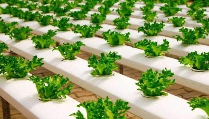 ખેતી કરીને દર મહિને કરો લાખોની કમાણી! આ ટેકનોલોજીથી ઓછી જમીનમાં થશે વધારે ઉત્પાદન