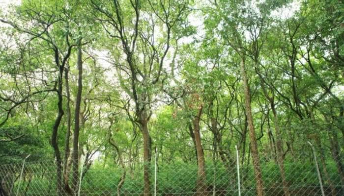 ચંદનની ખેતી કરી એક વૃક્ષમાંથી કમાઈ શકો છો લાખોરૂપિયા!જાણો ખેતીનો પ્રકાર